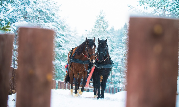 Aspen Carriage and Sleigh - Aspen: A Private Scenic Sleigh Ride for Two or Four at Aspen Carriage and Sleigh (Up to 47% Off)