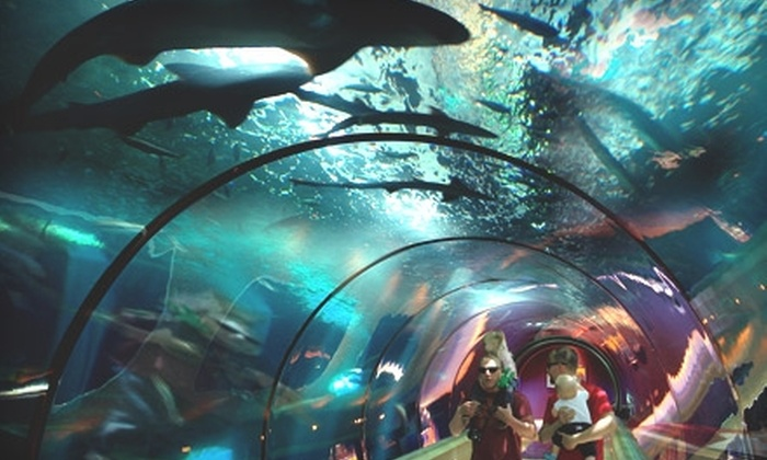 Oregon Coast Aquarium - Newport: Tickets to Oregon Coast Aquarium in Newport. Two Options Available.