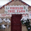 Up to 67% Off Christmas Tree in Oregon City