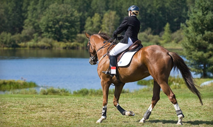 Bell View Acres - Chicago: Three Horse-Riding Lessons for One, Two or Four at Bell View Acres in Homer Glen