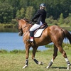 Up to 62% Off Horse-Riding Lessons in Homer Glen