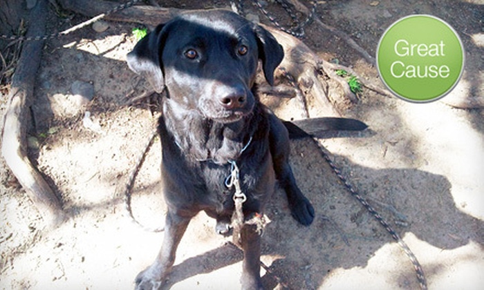 Fences For Fido - Portland: If 45 People Donate $11, Then Fences For Fido Can Build a Medium-Size Fence for Shadow, a Chained Dog on Its Waiting List