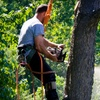60% Off Tree-Removal Services