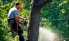 Adam's Pristine Acres - Falls Church: $99 for $250 Worth of Tree-Removal Services from Adam's Pristine Acres