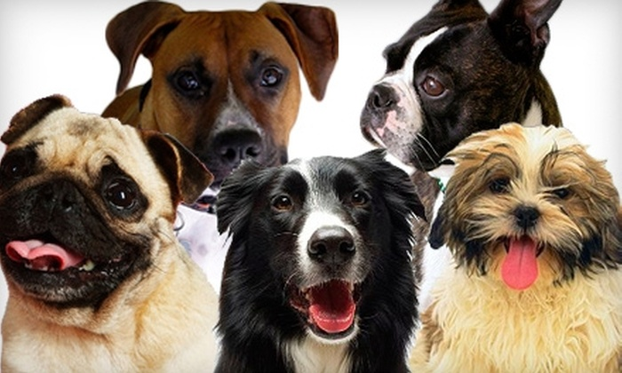 Buster & Lilly's Doggie Daycare - Bull Mountain: $40 for Three Doggie Daycare Visits and One Bath at Buster & Lilly's Doggie Daycare (Up to $86.50 Value)
