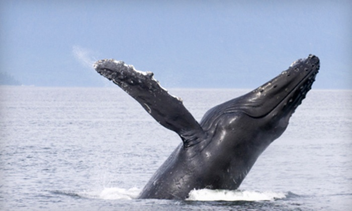 San Diego Whale Watch - San Diego : Three-Hour Whale-Watching Tour for One, Two, or 10 from San Diego Whale Watch (Up to 57% Off)