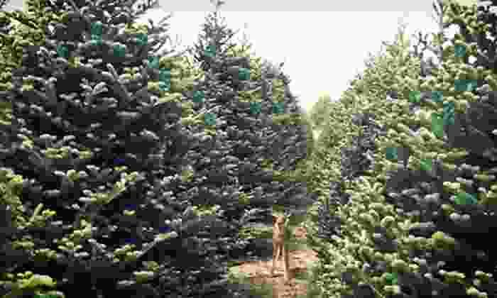 Hunt Tree Company - Multiple Locations: $15 for $30 Towards a Christmas Tree from Hunt Tree Company