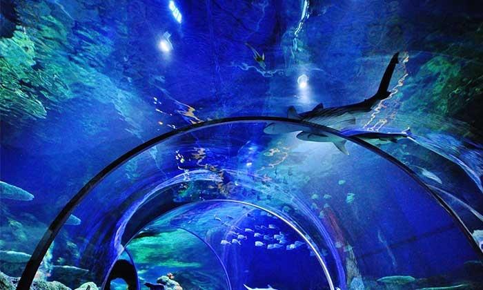 Sea Life Charlotte Concord Aquarium In Concord Nc