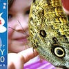 Half Off Butterfly Show Admission