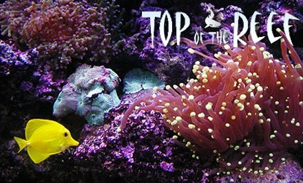 $50 Groupon to Top of the Reef - Top of the Reef in Phoenix