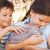 Up to 53% Off at The Gentle Zoo in Forney