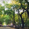 52% Off Walking Tour of Central Park