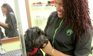 Paws In Paradise Pet Salon: $35 for $55 Worth of Pet Grooming — Paws In Paradise Pet Salon