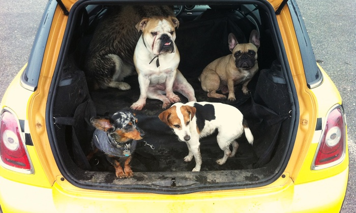 Dog Taxi Vancouver - Mt. Pleasant: Four Days and Three Nights of Dog Boarding, or One or Two Days of Doggy Daycare at Dog Taxi Vancouver (Up to 78% Off)