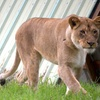 Up to 58% Off Special Events at Wildlife Safari
