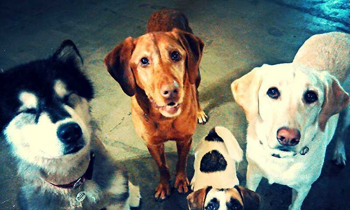 The Loved Dog - West Los Angeles: Up to 50% Off Dog Boarding at The Loved Dog