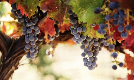Day Trip to Michigan Wine Country with Lunch, Tastings, and Round-Trip Transportation Included (47% Off)
