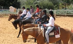 חוות הרי יהודה - חוות סוסים: מקדימים להזמין: קורס רכיבה על סוסים לילדים בחופש הגדול! החל מ-669 ₪ לקורס של 5 ימים בחוות הרי יהודה