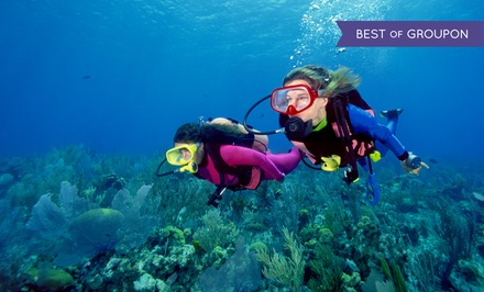 $128 for Full Open-Water Scuba Certification Course from Dip 'N Dive ($229 Value)
