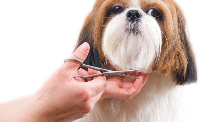 Cut & Dry Pet Salon - Multiple Locations: $25 for $40 Worth of Pet Grooming — Cut & Dry Pet Salon
