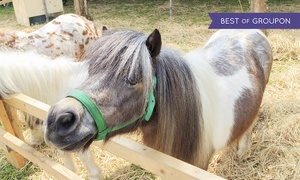 Lemos Farm: Farm Day Passes for 2 Kids and 2 Adults, or $50 Toward a Children's Party at Lemos Farm (Up to 50% Off)