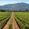 Stay at Best Western Plus Sonoma Valley Inn in Sonoma Valley, CA