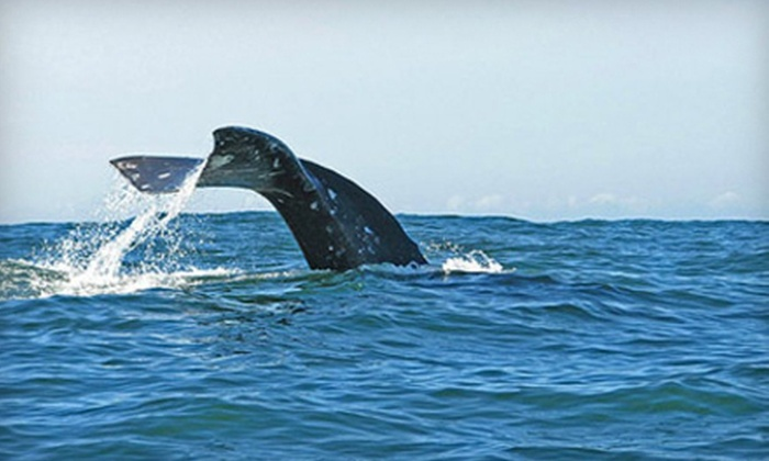 OEX La Jolla - La Jolla Shores: Two-Hour Whale-Watching Kayak or 90-Minute Sea-Cave Tour from OEX La Jolla (Up 75% Off)