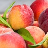 Half Off Peach Picking at Jones Orchard