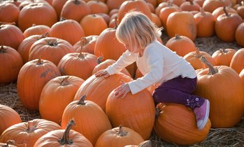 Up to 38% Off Pumpkin Picking Packages at Apple Ridge Orchards