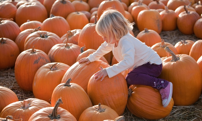 Apple Ridge Orchards - Warwick: Pumpkin Picking, Hayrides, Cider, and Donuts for Two, Four, or Six at Apple Ridge Orchards (Up to 49% Off)