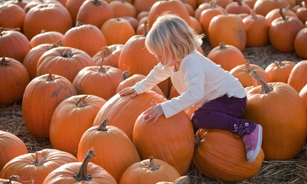 Pumpkin Picking, Hayrides, Cider, and Donuts for Two, Four, or Six at Apple Ridge Orchards (Up to 52% Off)