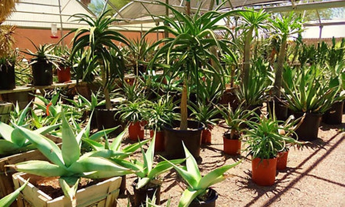 Desert Gardens Nursery - Paradise Valley: Desert Plants and Garden Accessories at Desert Gardens Nursery (Up to 55% Off). Two Options Available.