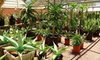 Up to 55% Off Desert Plants & Garden Accessories