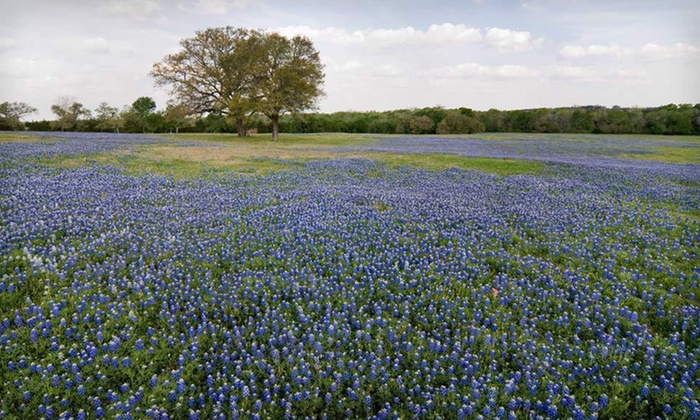 First Class Bed & Breakfast Reservation Service - Port Aransas: Two-Night Stay for Two from First Class Bed & Breakfast Reservation Service in Fredericksburg, TX or Port Aransas, TX