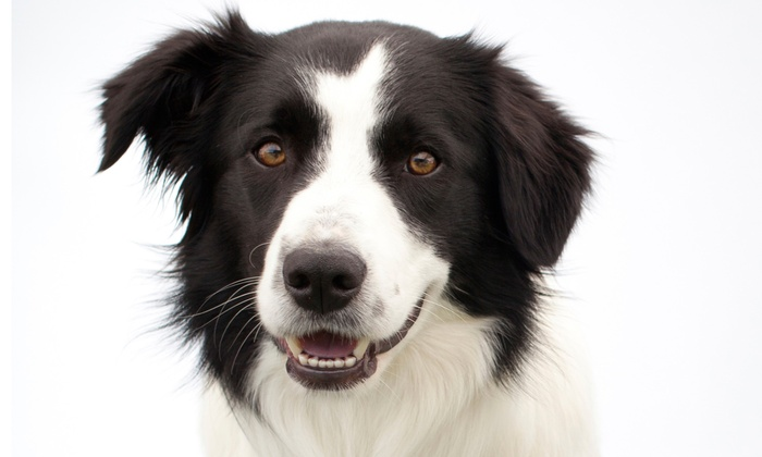 Pimp My Pooch Pet Spa - Burbank: $169 for Anesthetic-Free Teeth Scaling at Pimp My Pooch Pet Spa ($340 Value)