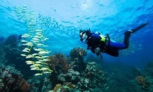 Centrum Nurkowe BLUE PLANET: Program nurkowania PADI Discover Scuba Diving (od 59,99 zł) lub PADI Divemaster PADI i więcej (2350 zł) w CN Blue Planet