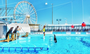 Leoni Marini: Ingresso per lo spettacolo dei leoni marini, per adulti e bambini, al Acquario di Rimini (sconto fino a 41%)