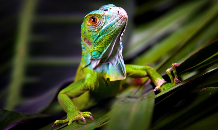The Reptile Guy's Rescue and Education Center - Abbotsford: C$12 for Family Day Pass for Four at The Reptile Guy's Rescue and Education Center(C$25 Value)
