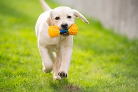 Jane's Canines: Three Days of Doggy Daycare at Jane's Canines (45% Off)