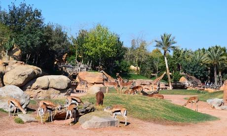 Entrada al zoológico Bioparc de Valencia por 18,50 €