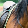 Up to 53% Off Riding Lessons at Creekside Farm