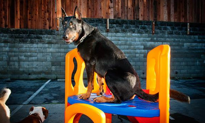 Citipets - Bayview: One or Three Days of Dog Daycare or One or Three Nights of Dog Boarding at Citipets (Up to 51% Off)