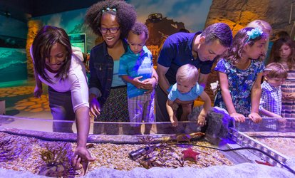 image for Admission for One Adult or One Child at Sea Life (Up to 18% Off). Four Options Available.