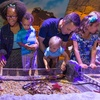 Up to 18% Off Admission at Sea Life