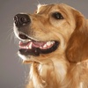 53% Off a Wellness Exam and Heartworm Test