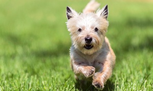 2 Dogs & A Cat, LLC: $17 for $30 Worth of Services at 2 Dogs & A Cat, LLC