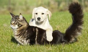 I Dogue dell'Olona: Da 2 a 7 giorni di pensione per animali di taglia piccola o grande