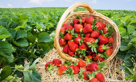 $12 for Strawberry and Vegetable Picking at Burr's Berry Farm ($20 Value)