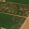 50% Off Visit to The Willis Farm Corn Maze