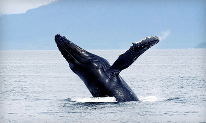 Dockside Whale Watching & Charters - Digby: Three-Hour Whale-Watching Cruise for an Individual or Family of Four from Dockside Whale Watching & Charters (Half Off)